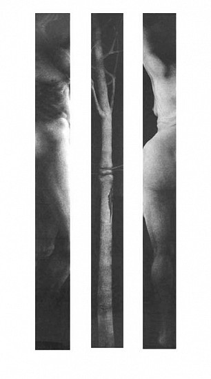 Elaine Green, Unhomelike #2 - Triptych 2003, charcoal on watercolor paper