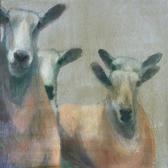 Claudia Pettis, Border Leicesters I 2009, oil on linen