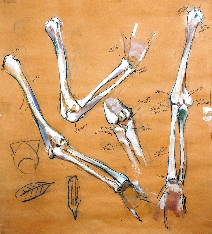 Peter Cox Upper Amp Lower Arm Bones 2017 The Art Spirit Gallery