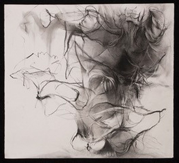 Melissa Lang, Wingspan 2019, charcoal on paper